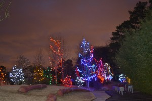 Part of the backyard all lit up!